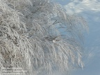 Winter Ornamental grasses Arboretum Trojanów M.J